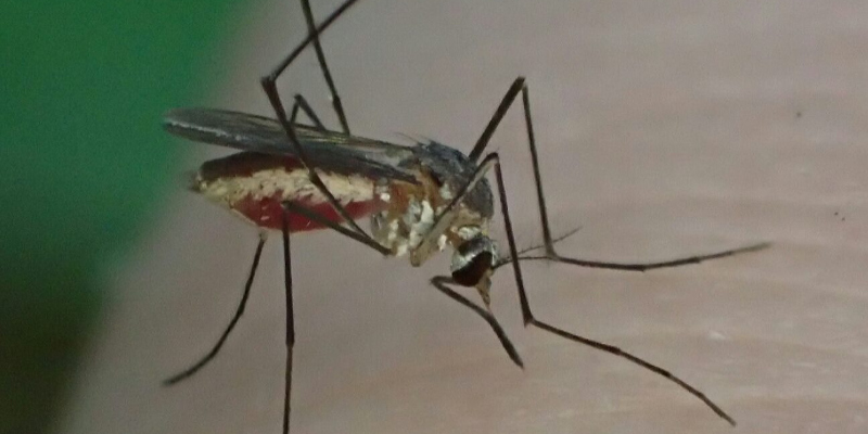 Mosquito Control in Holly Springs, North Carolina