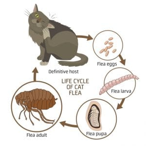 we can assess the situation and provide a plan for flea control