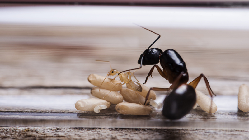 Why Would I Want to be an Ant?