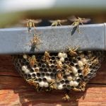 Wasp Removal in Fuquay-Varina, North Carolina