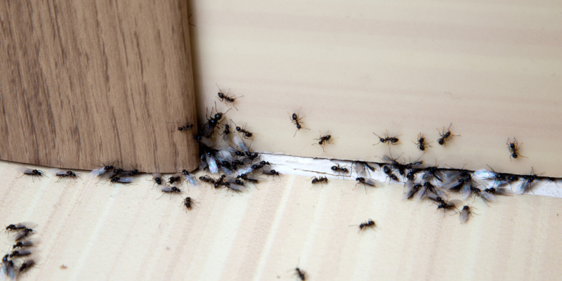 exterminator to take care of a pest or insect problem