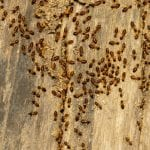 Commercial Termite Control in Holly Springs, North Carolina
