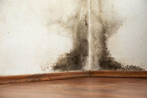 We have trained moisture remediation professionals
