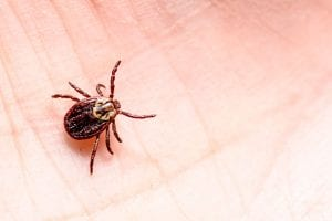 we're here to help you with your tick removal process