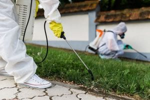Take Care of Your Insect Problem for Good with Insect Removal