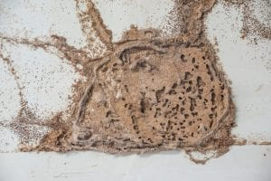 above-ground termite control is often the solution