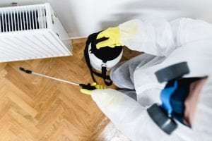 5 Signs You Need to Call an Exterminator