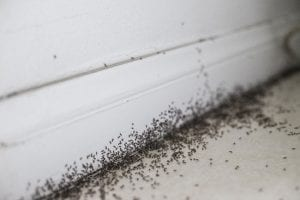 Top Ways to Implement Ant Control