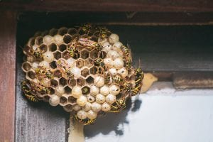 Stinging Insect Control: Ways to Protect Yourself