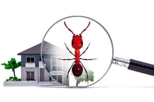 Top Reasons to Invest in a Pest Real Estate Inspection