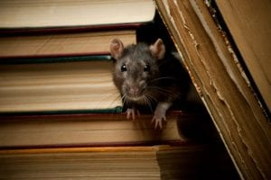 you'll need to be careful about rodent control