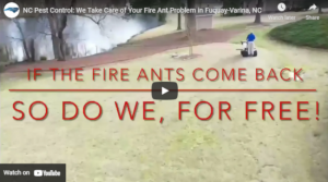 NC Pest Control: The Expert Fire Ant Control in Fuquay-Varina, NC